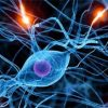 Complex Neural Pulse and fibromyalgia